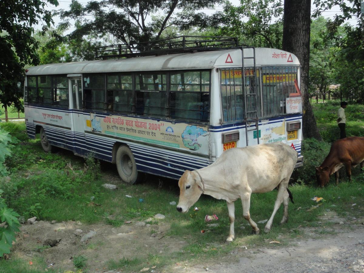 牛のバス 車酔い