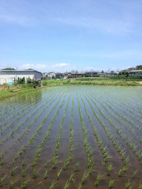 farm1、畑