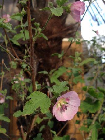 春 ピンクの花